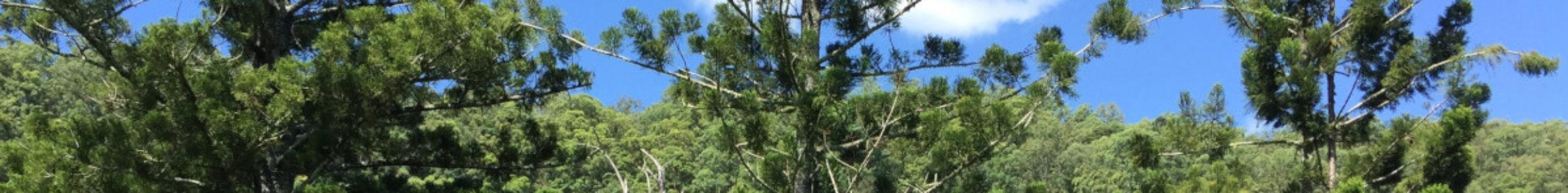 Araucaria Wildlife Sanctuary News